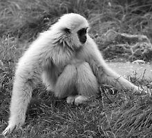 Cuddle Monkey by Deborah  Bowness