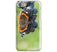 Red Admiral Eating Grapes iPhone Case/Skin