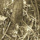 lonely leaf sepia by randi1972