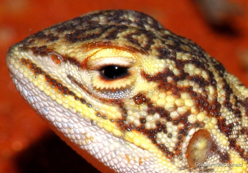 Dragon eye by Stewart Macdonald