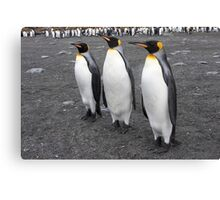 """King Penguins ~ """"On Parade"""" Canvas Print"""