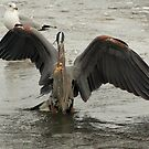 Catch of the Day by Gene Praag