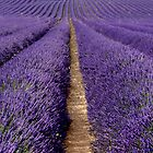 It is All About  Provence by Raphael Lopez