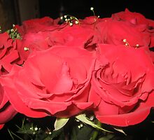 Red Roses by nfelczer