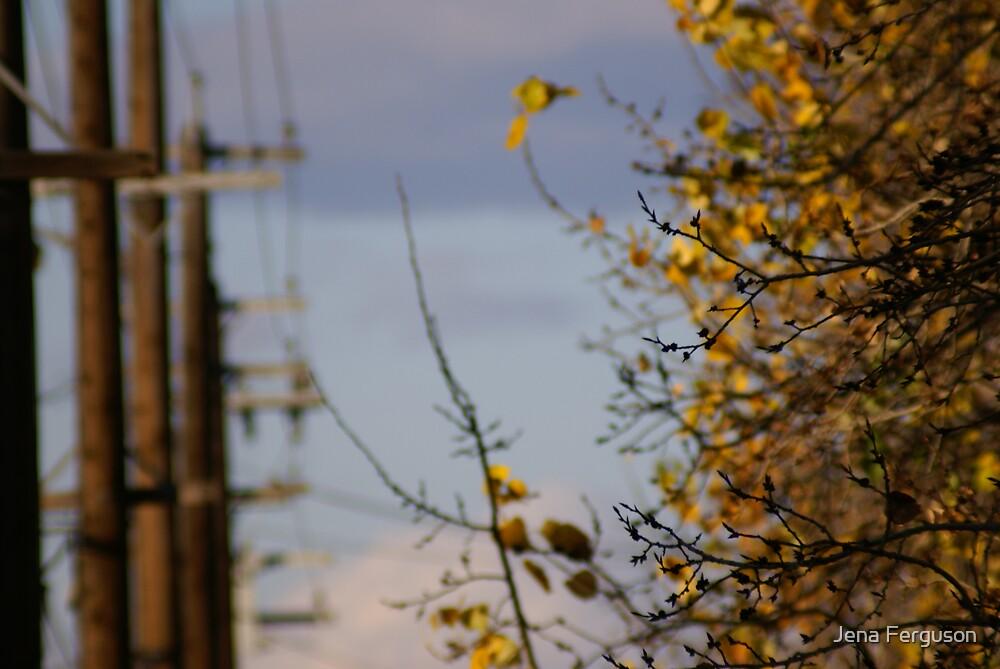 Fall by Jena Ferguson