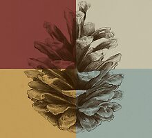 Pine Cone by Eric Fan
