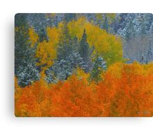 Mix of two seasons Canvas Print