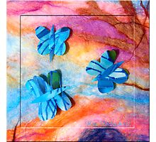 Three Silk Butterflies Photographic Print
