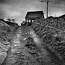 Road Home by Annette Blattman