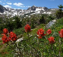 Indian paintbrush by george tuffy