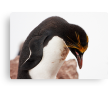 "Macaroni Penguin ~ ""...at the end of a hard day..."" Canvas Print"