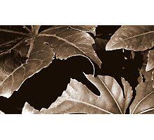 Edges Photographic Print