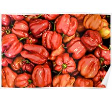 Red Habanero Peppers Poster