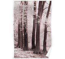 Woodland, Swansea Valley Poster