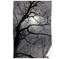Backlit trees Poster