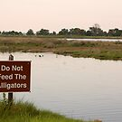 Do Not Feed the Alligators by Stacey Lynn Payne