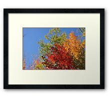 Foliage in Autumn Framed Print