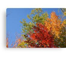 Foliage in Autumn Canvas Print