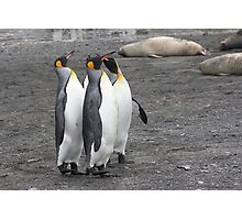 "King Penguins ~ ""The Line Dancers"" Photographic Print"