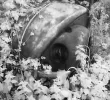 Talybont Beetle by Hywel Harris
