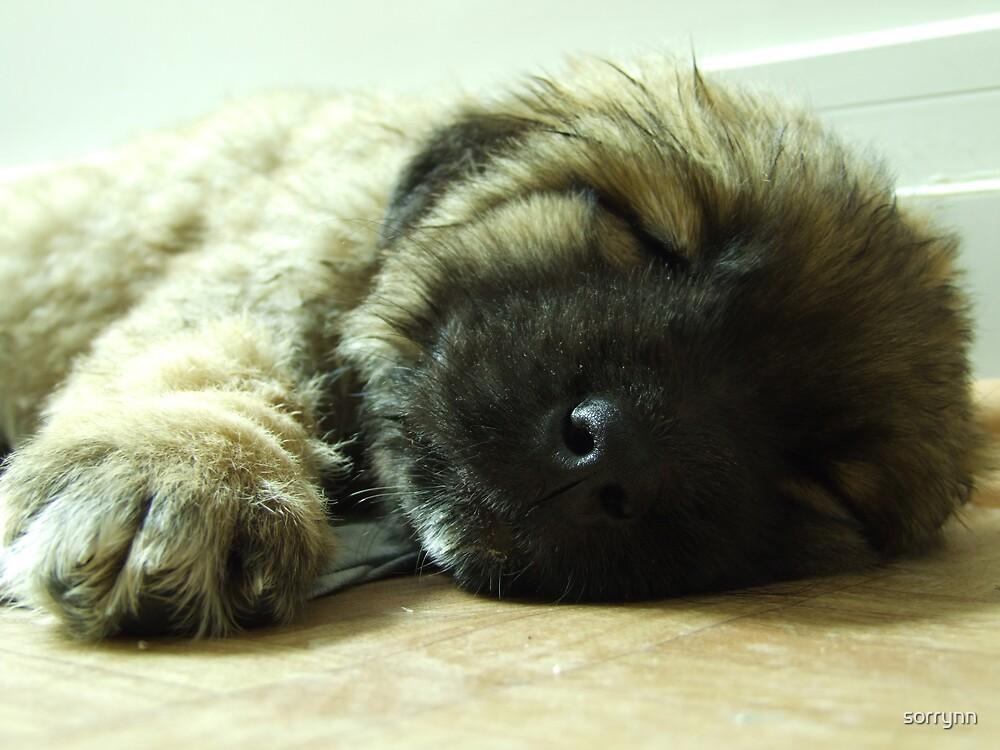 Please let me sleep! I'm tired... by sorrynn