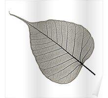 Leaf Skeleton Black Poster