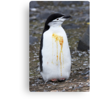 "Chinstrap Penguin ~ ""Who Flung Dung?"" Canvas Print"