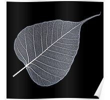 Leaf Skeleton White Poster
