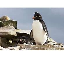 "Rockhopper Penguins ~ ""Welcome to our home"" Photographic Print"