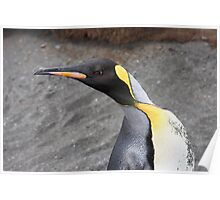 "King Penguin ~ ""Alert to Danger"" Poster"