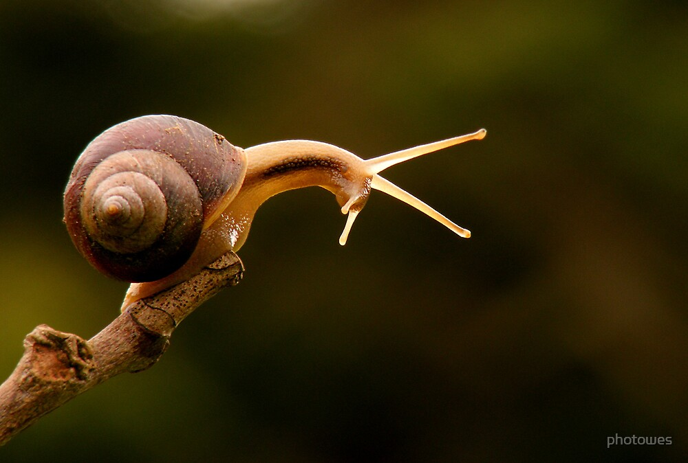 Small snail 2 by photowes