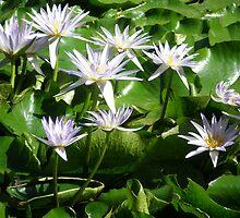 Fiore d' L'acqua by rosebudz