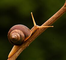 Small snail 3  by photowes