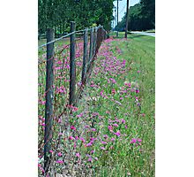 Barbed Wire and Wildflowers Photographic Print