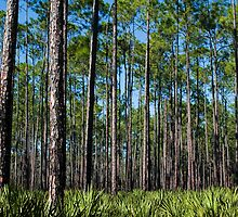 Pines and Saw Palmettos by Stacey Lynn Payne