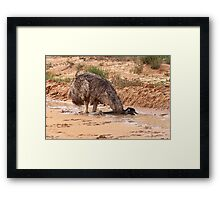 Emu ~ Drink with your back to the Wind Framed Print