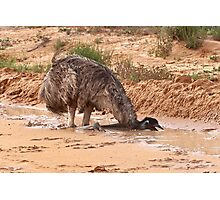 Emu ~ Drink with your back to the Wind Photographic Print