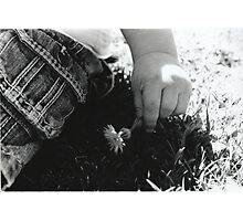 Little Flower Photographic Print