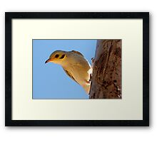 Yellow-tinted Honeyeater ~ Please say cheese Framed Print