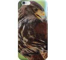 Red Tail Hawk iPhone Case/Skin