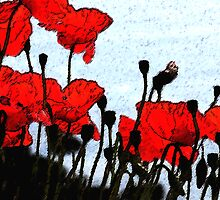 Poppies Photoshopped by SWEEPER