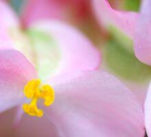 Floral Butterflies - Begonia Sticker