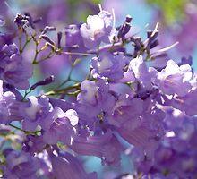 Spring Jacaranda Blossoms by Renee Hubbard Fine Art Photography
