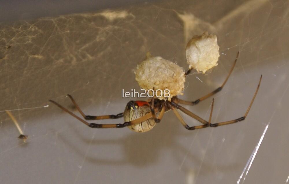 Brown Widow Spider - (Latrodectus geometricus) Button Spider - La Mirada, CA USA by leih2008