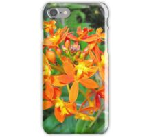 'Fire' Native flower, Thursday Plantation, 'Ballina' N.S.W. iPhone Case/Skin