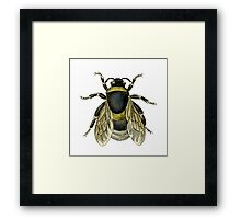 antique typographic vintage honey bee Framed Print