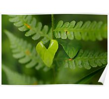 I wear my heart on my leaf Poster