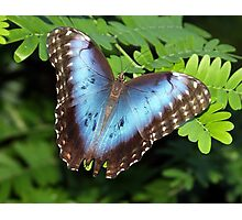 Wings of Beauty Photographic Print