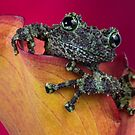 Cheeky mossy frog by Angi Wallace