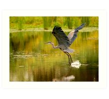 Heron Liftoff Art Print